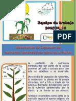 Mecanismos de Captacion de Nutrientes Final