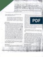 Ciclo Celular y Su Regulacion
