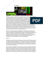 Celulas geneticas desarrolladas