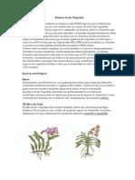 Orquideas Afp