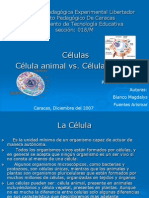 celula vegetal y animal.pptx