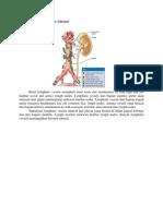 Drainasi Limfatik Inervasi Adrenal