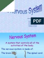 nervoussystemppt-110421022835-phpapp02