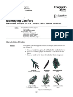 Conifers Identifying