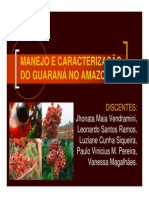 Cultura Do Guarana
