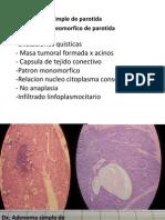 Micro Anatopato II Parcial