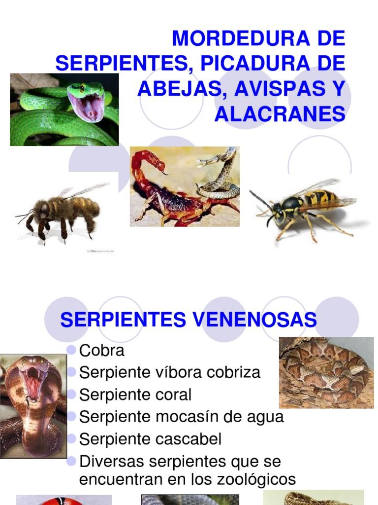 Único Anatomía De Una Mordedura De Serpiente Galería - Imágenes de ...