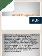 Arbol_Filogenetico