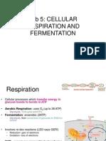 Lab 5_Cellular Respiration and Fermentation_student_2011