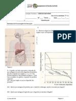 3º Período  teste sist digestivo e urinario