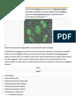 Célula madre biotecnologia.docx