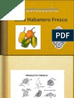 Chile Habanero Fresco