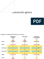 6-Interaccion genica.pdf