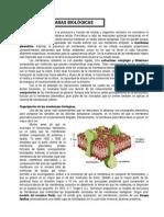 modulo5.doc