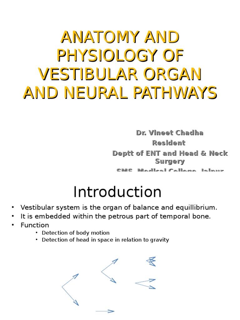 Anatomy and Physiology of Vestibular Organ and Neural   Vestibular ...