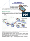 1serie Biocito Metabo Energe