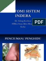 Anatomi Sistem Indera2