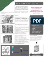 RESOLUCIÓN TAREA EPITELIOS.pdf