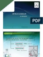 EPITELIO GLANDULAR JANO.pdf