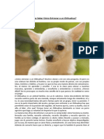 Entrenar a Un Chihuahua