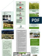 Agrifood Consulting International's Experience in the Rice Sector