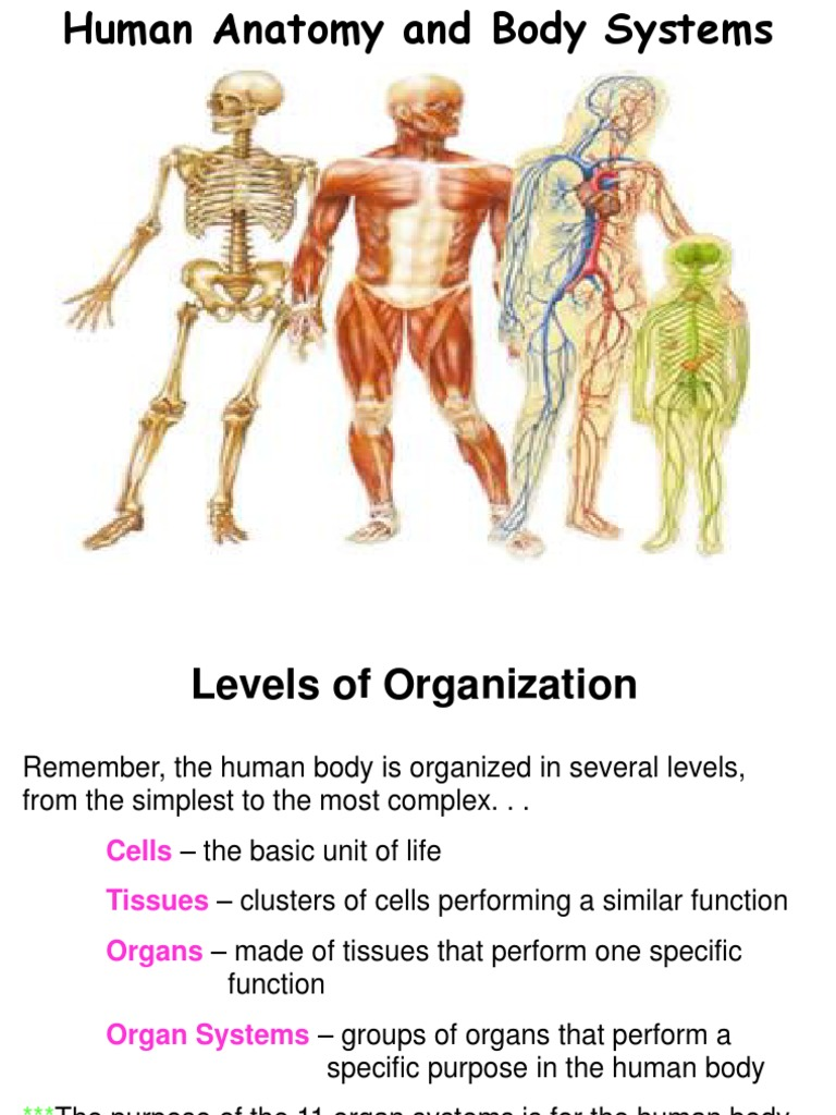 Human Body Systems | Human Body | Lung