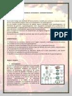 ovogenesisyespermatogenesis.docx