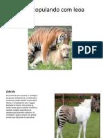 Híbridos (1).pptx