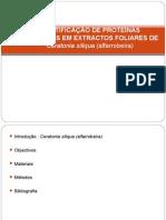 identificação de proteínas presentes em extractos foliares de alfarrobeira (2009)