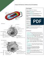 Gambar Ultramikroskopis Sel Prokariot