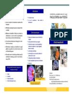 Pliant de Prezentare a Specializarii Fizica Medicala