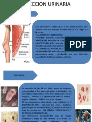 Infeccion intestinal bacteriana pdf