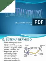 elsistemanervioso1000-111122163749-phpapp02