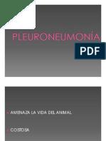 Pleuroneumonia Equina