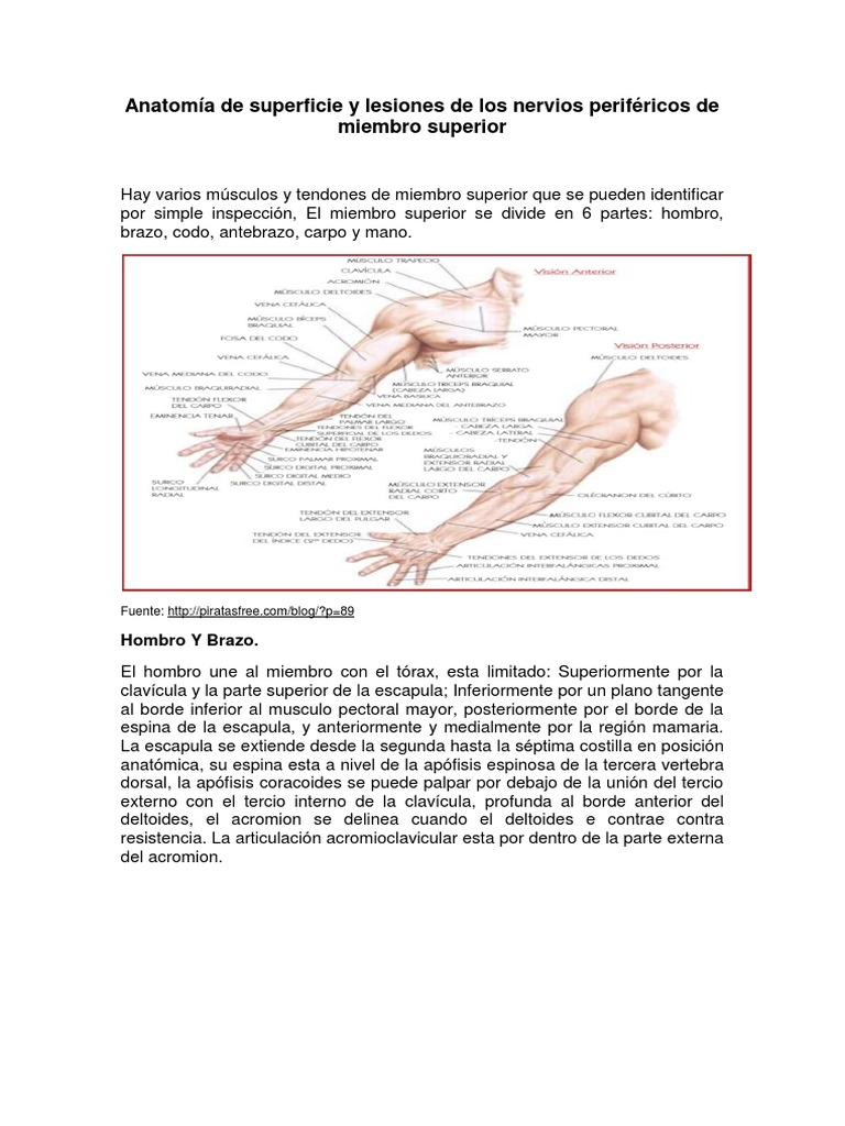 Anatomía de superficie y lesiones de los nervios periféricos de ...