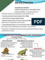 Mammalia Cp