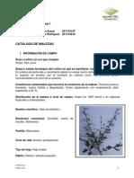 Catalogo Malezas 2013