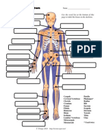bonediagram wkst1
