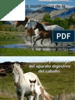 Aspectos zootécnicos de la alimentación equinos