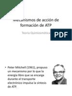 Mecanismos de acción de formación de ATP