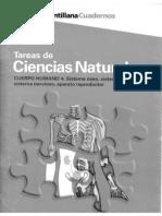 CUERPO HUMANO 4. SISTEMA ÓSEO, SISTEMA MUSCULAR, SISTEMA NERVIOSO, APARATO REPRODUCTOR.pdf
