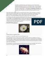 Familia Cactaceae