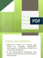 Celula Eucariotica y Procariotica