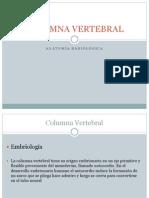 Columna Vertebral[Diapositibas]