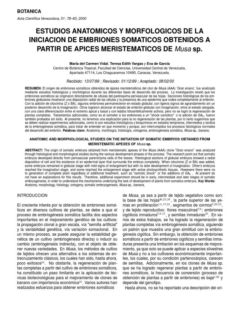 Embriogénesis de Musa