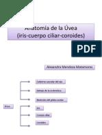 Anatomía de la Úvea