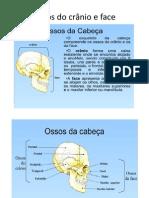 Ossos do crânio e face TR06