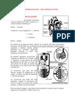 EL Pulso-generalidades (1)