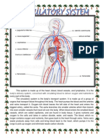 System Of The Body.docx