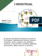 147530879-Ciclo-Menstrual.pdf